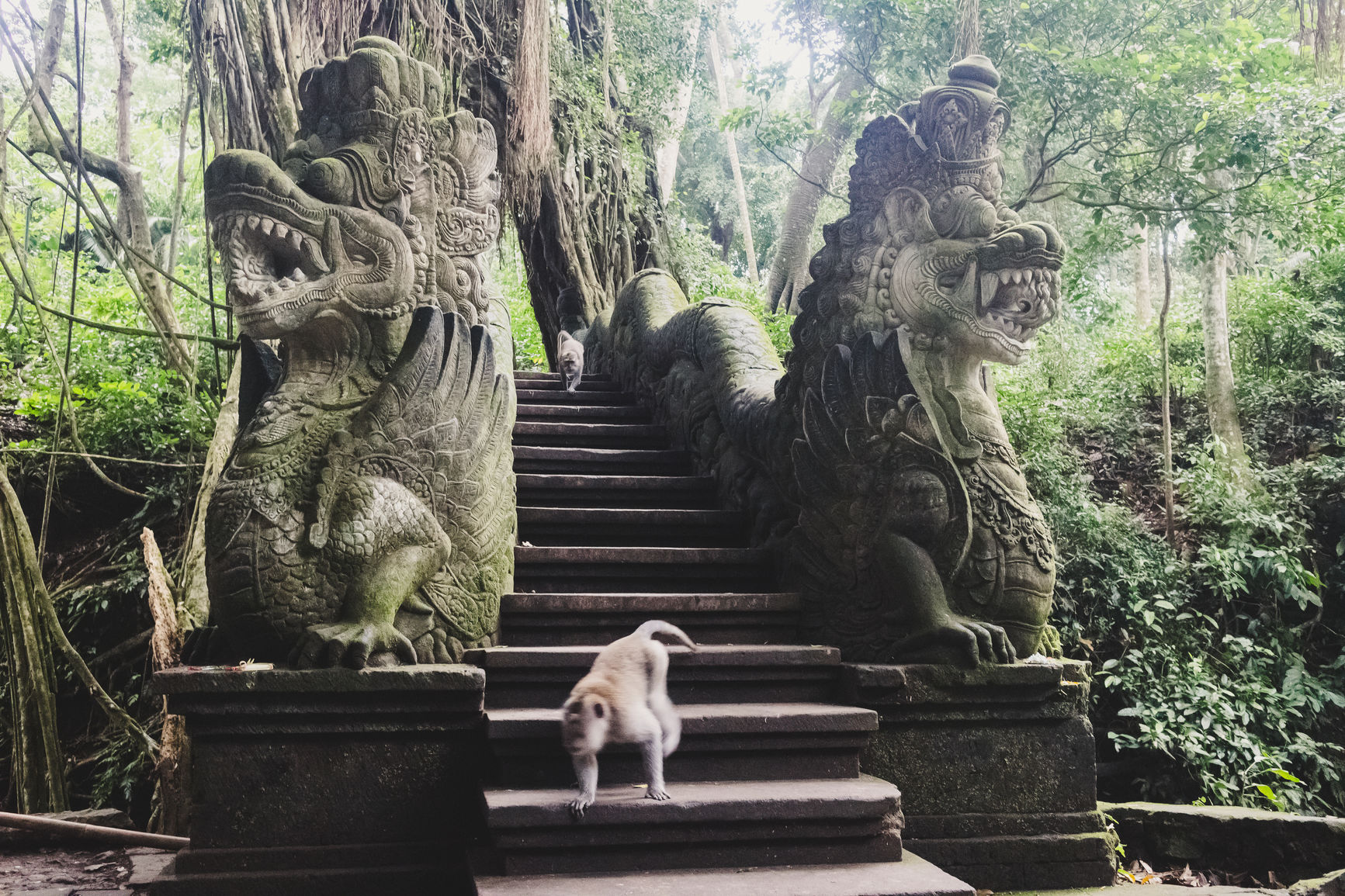 Monkey Forest in Bali, Indonesia.