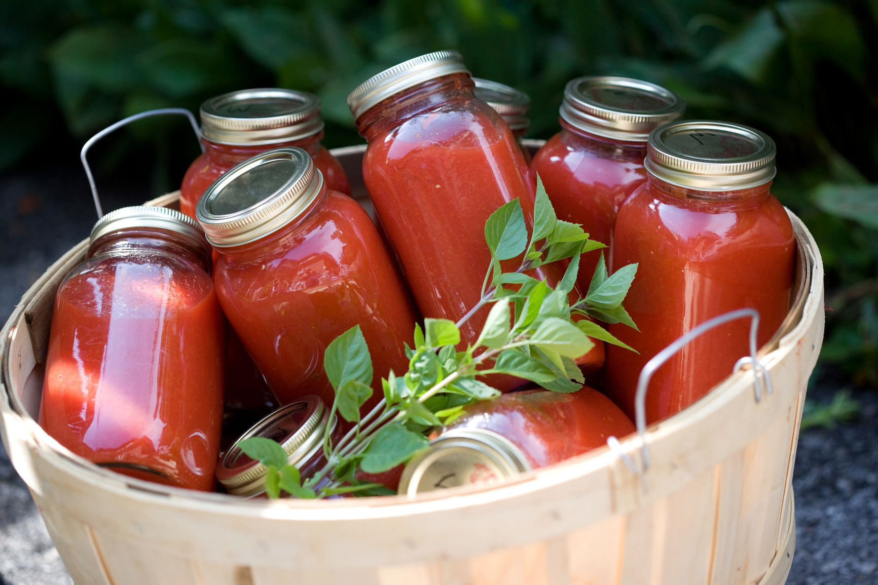 Fresh tomato sauce preserved in jars with basil. Vertical format available.