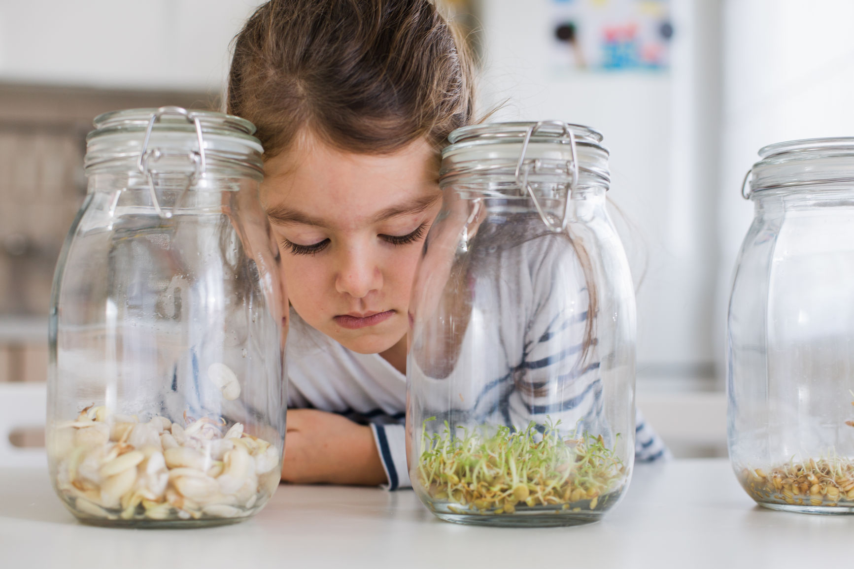 Child looking at the seeds sprouting in a jar as an experiment in homeschooling