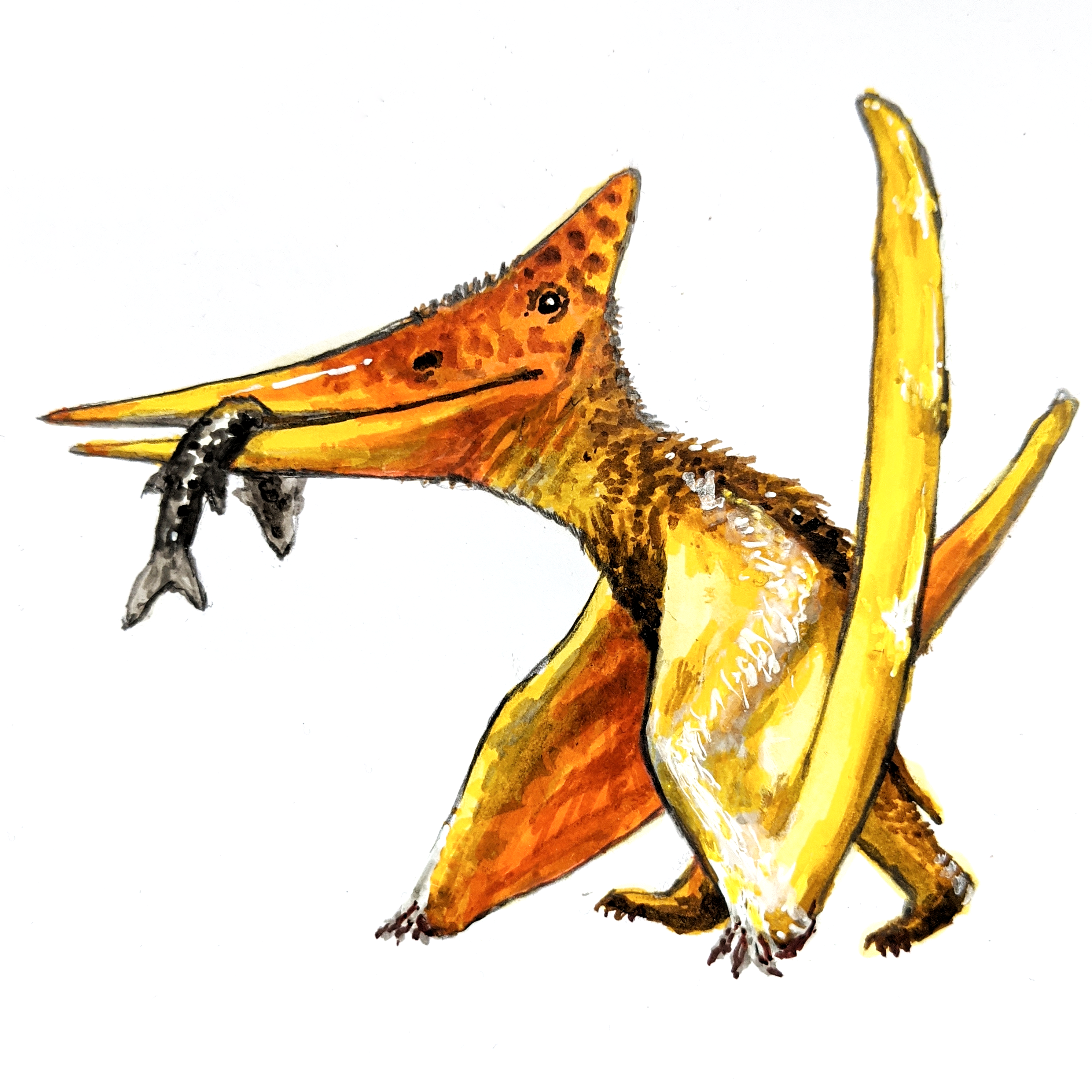 Orange and yellow Pteranodon, an ancient reptile