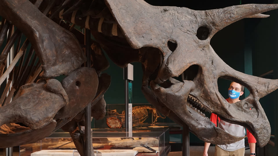 Man looking through the eye of a Triceratops fossil display