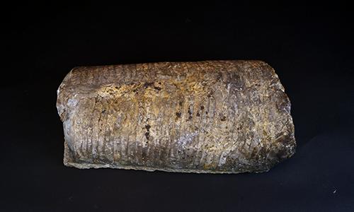 Endoceras fossil