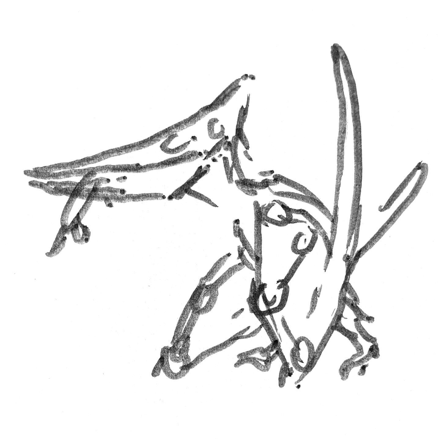 Pteranodon drawing holding a fish in their mouth