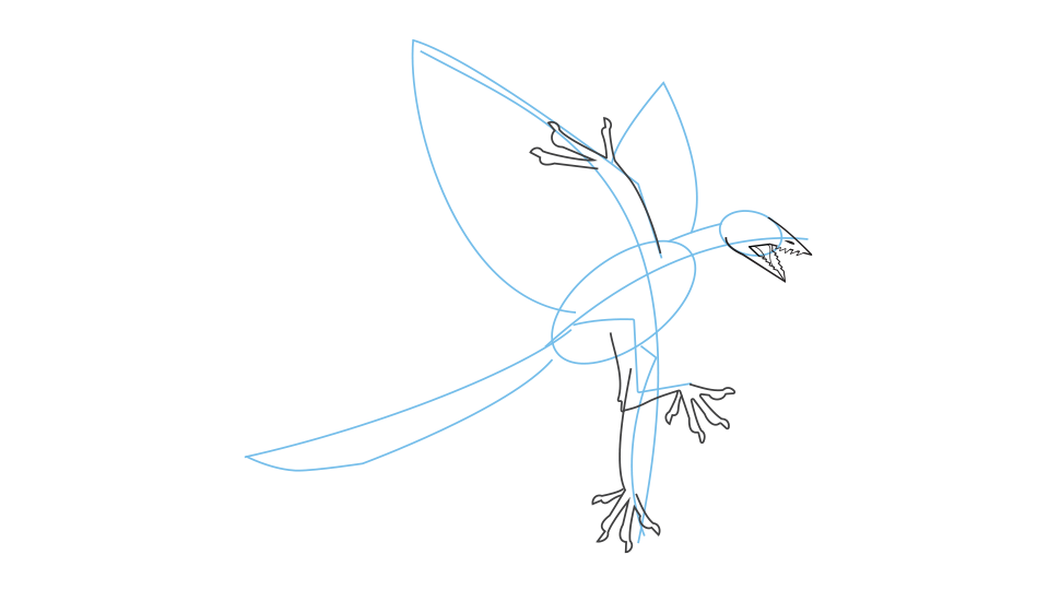 How to draw an archaeopteryx step 3