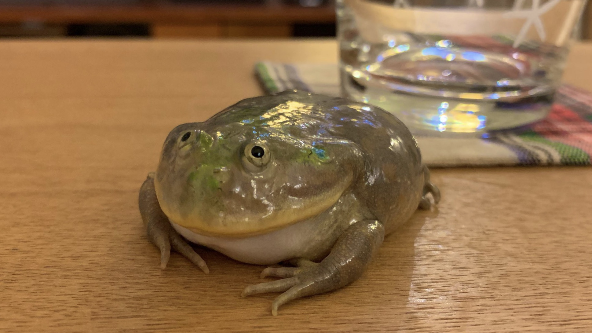 カエルと同居するということ。
