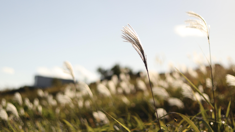 文章を綴って夏目漱石を想う。