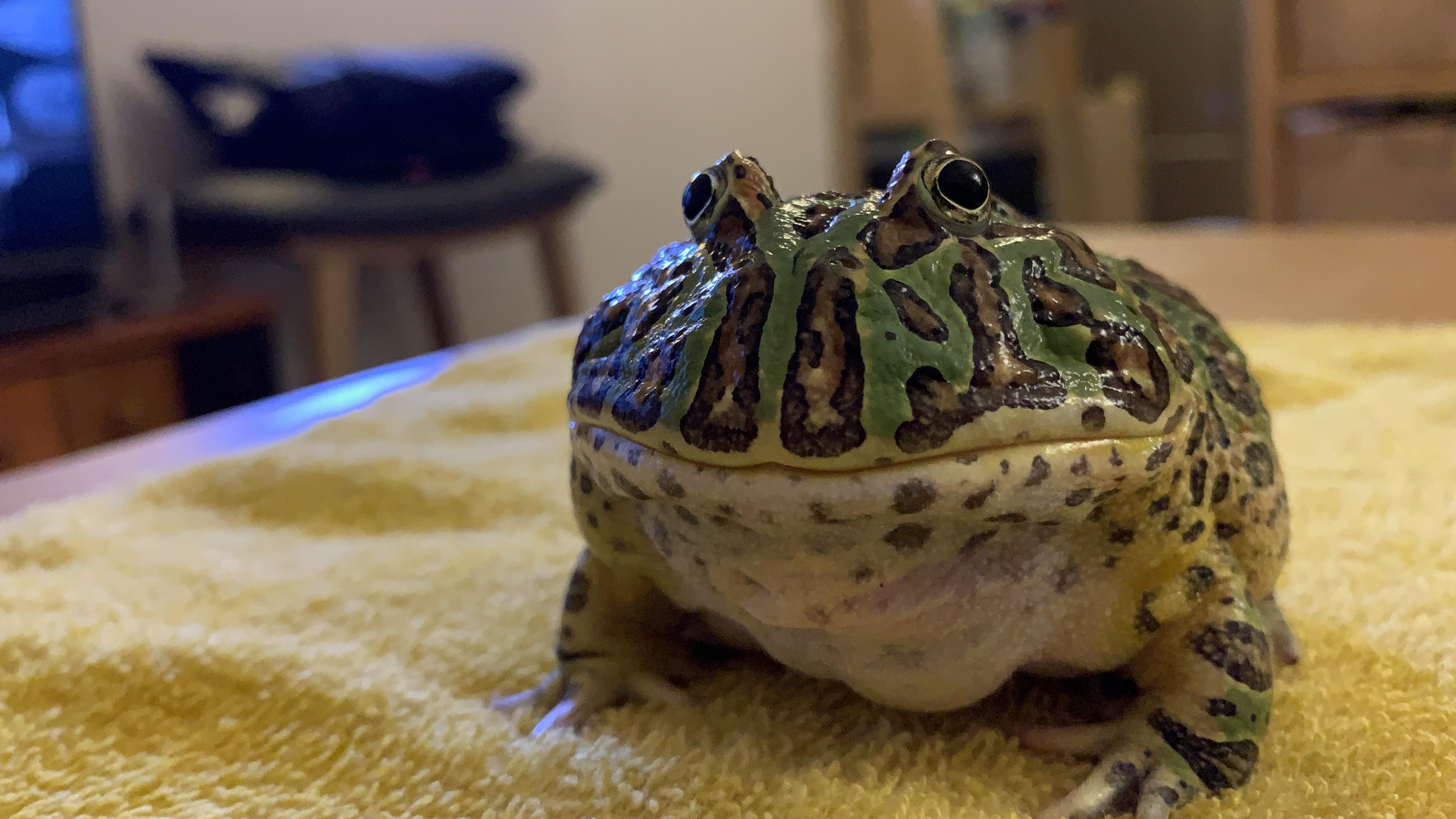 カエルくんの家。