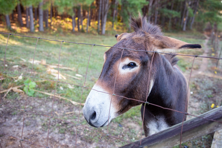 Donkey looking through a fence on a manufactured home property.
