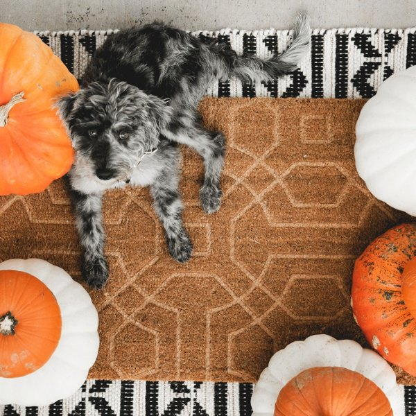 Fall front porch mat with dog.