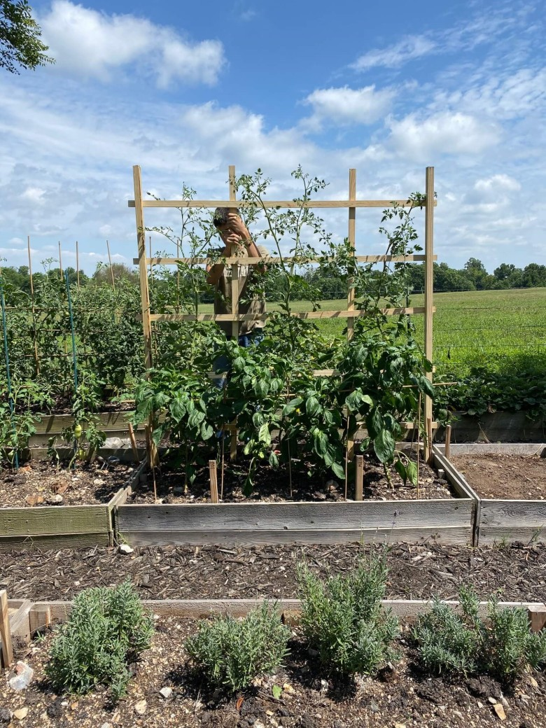Trellis with tomatoes plants in the garden of a manufactured home.