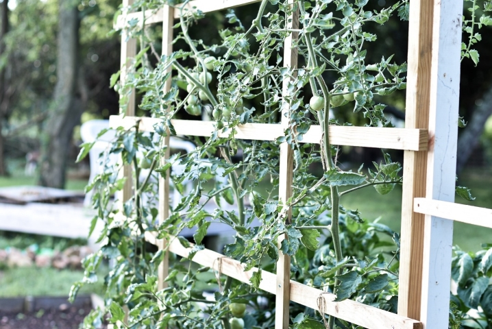 DIY tomato trellis in the garden of a manufactured home.