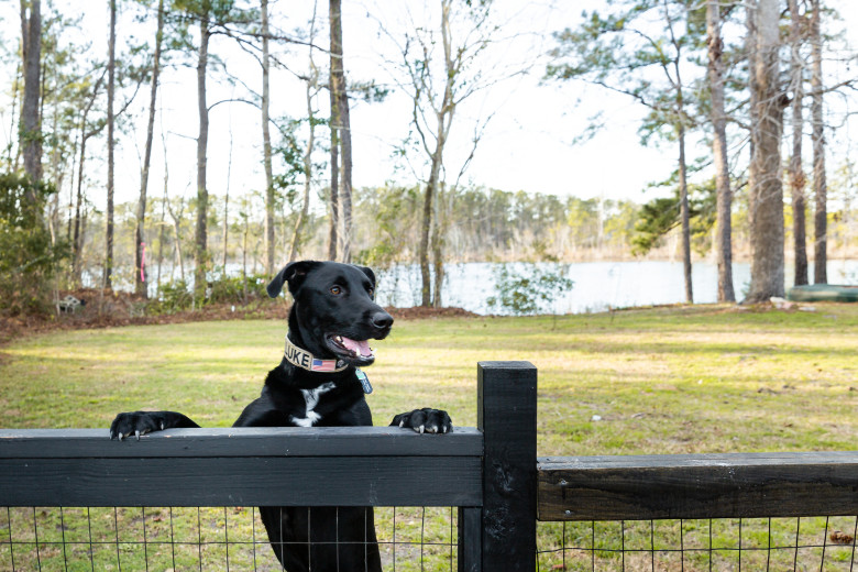 Black dog peers over fence in front of lake
