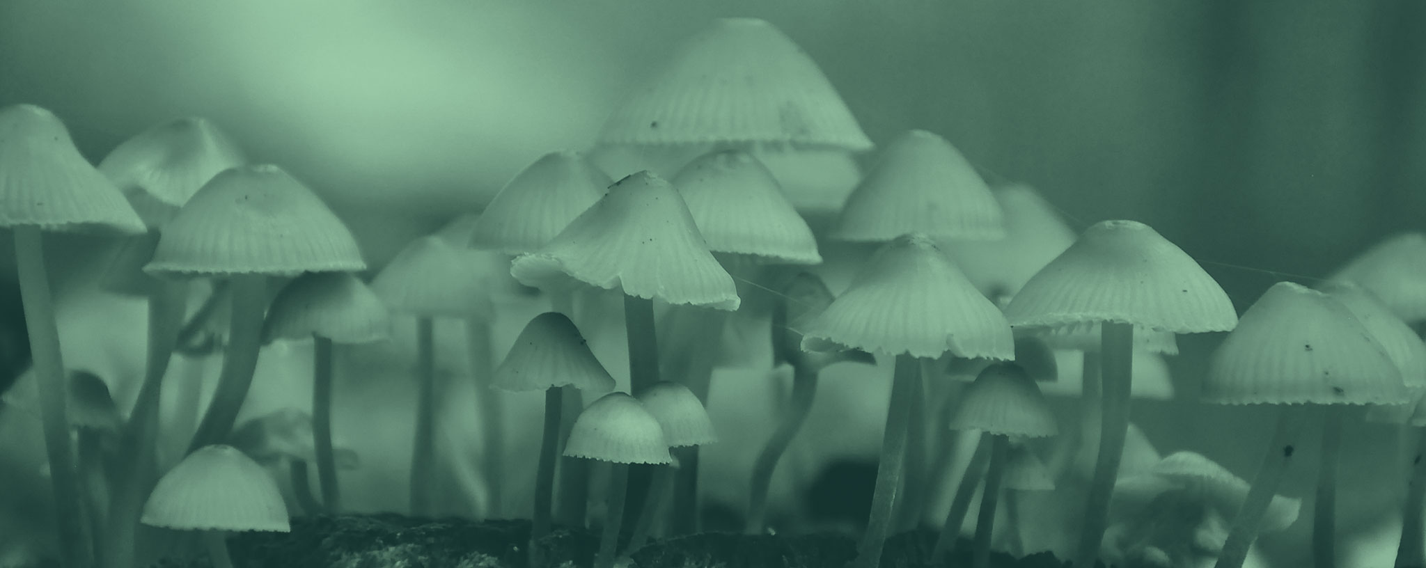 Could psychedelic drugs revolutionise how we treat mental health conditions?