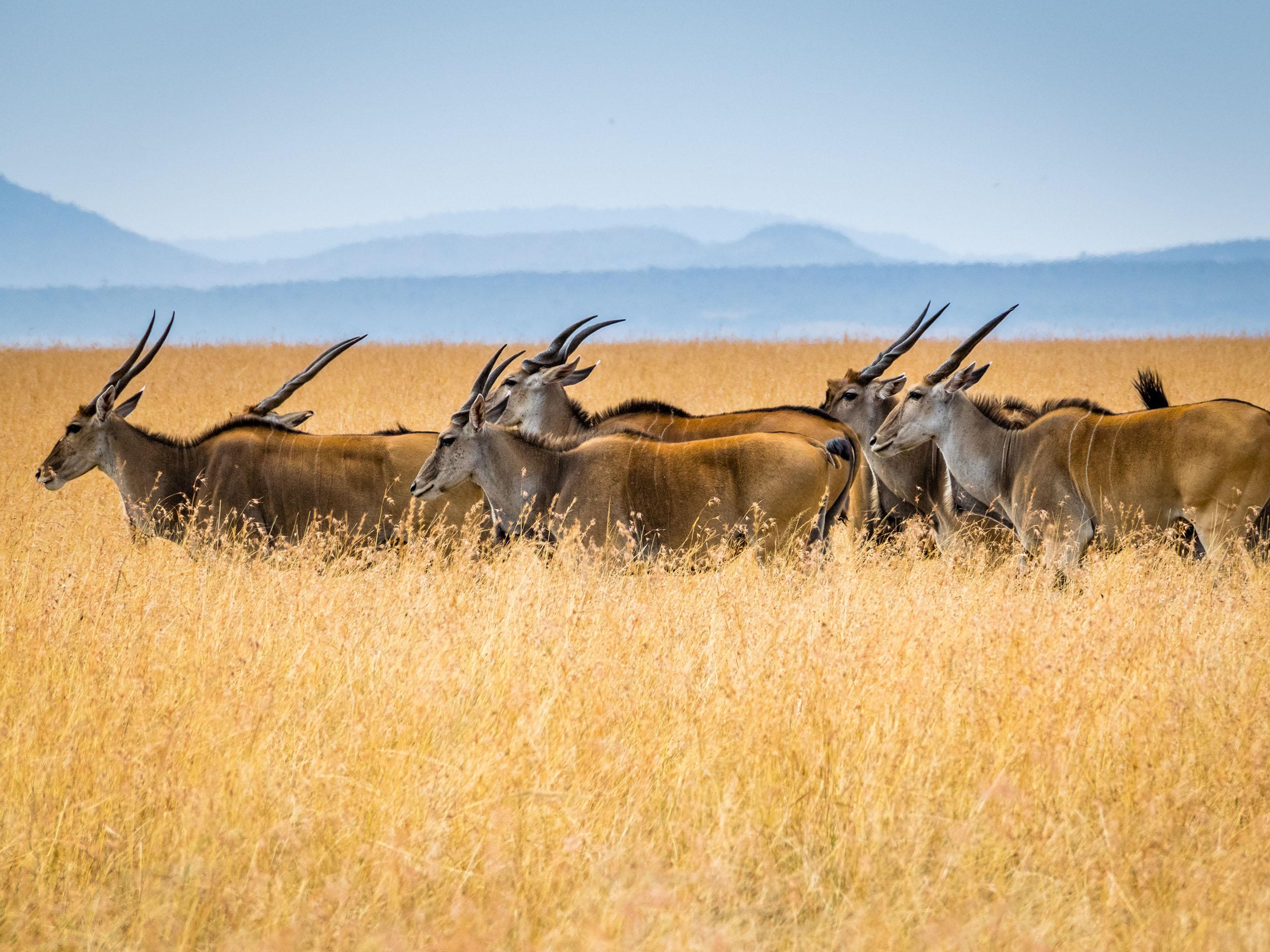 Antipodeans — (Eswatini) Swaziland