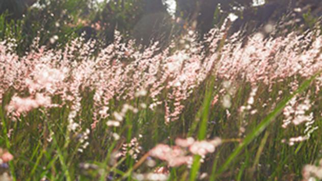 Wiese mit Pollen