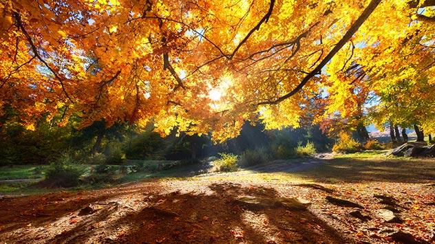 Herbstanfang - Wetterlexikon von A bis Z