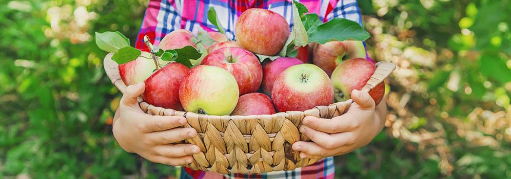Welches regionales Obst und Gemüse hat im Herbst Saison? Wo stecken  besonders viele Vitamine drin? Und was ist das Lieblingsobst der Deutschen?