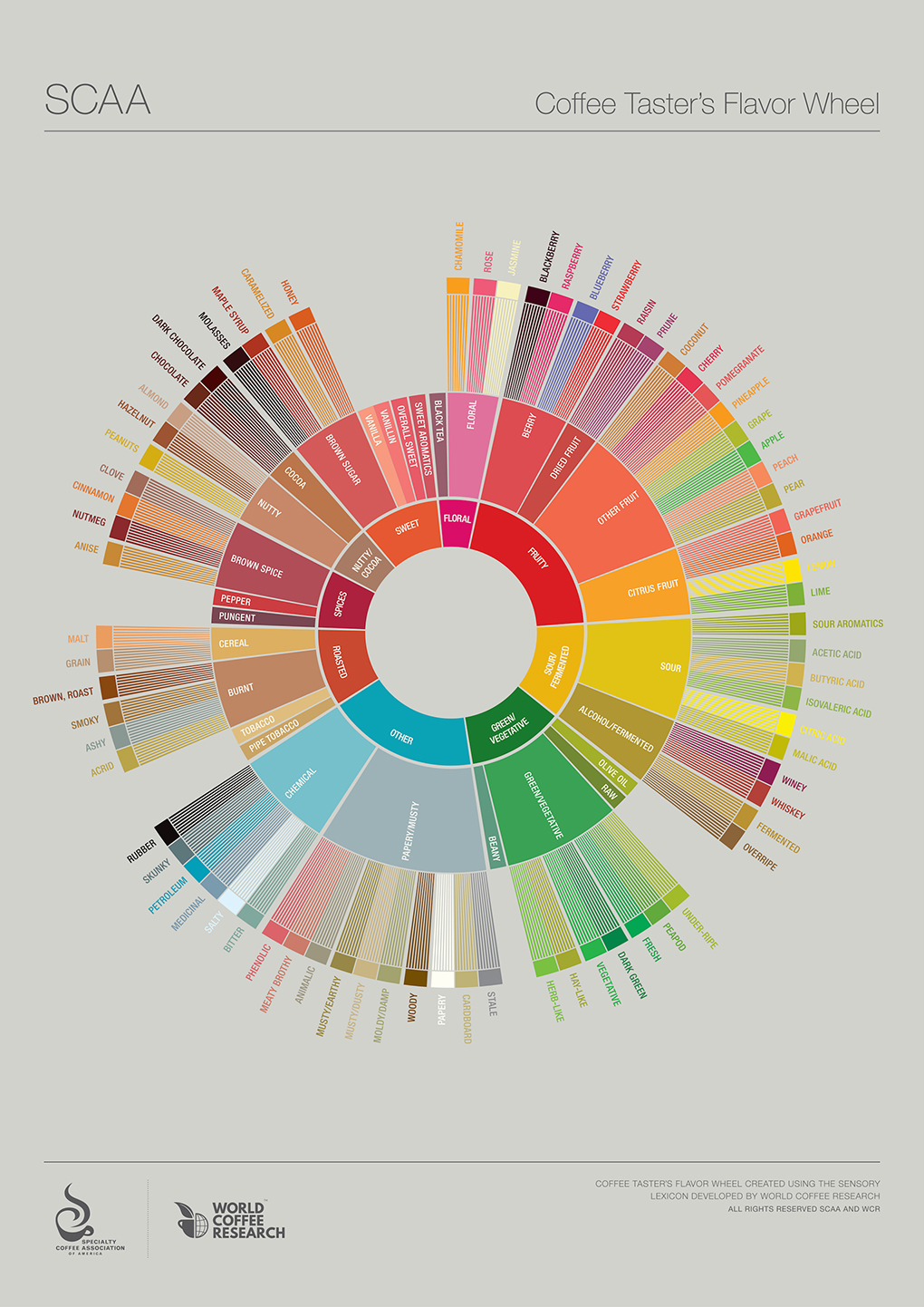 graphik-coffee-tasters-flavor-wheel