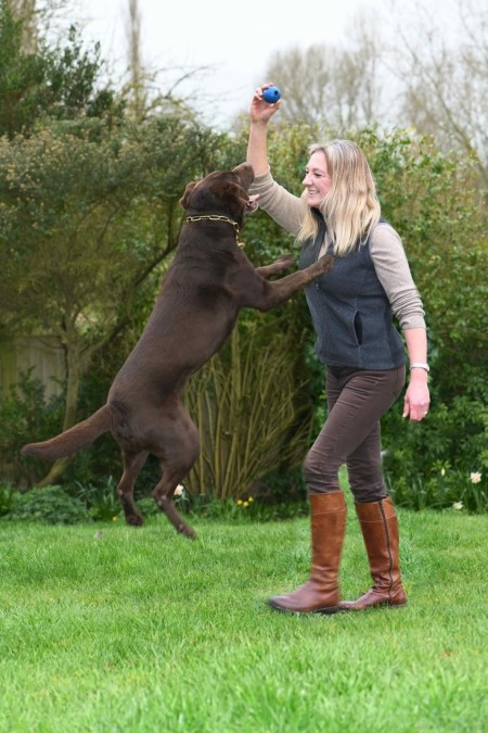Branston the Chocolate Labrador playing with a ball