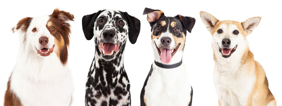 four dogs with their mouths open