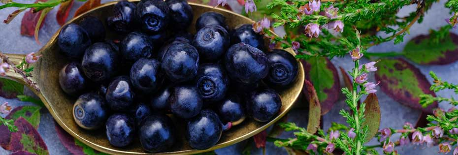 Blueberries as a source of quercetin