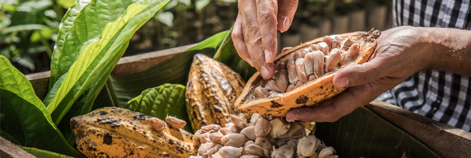 Man with cocoa beans