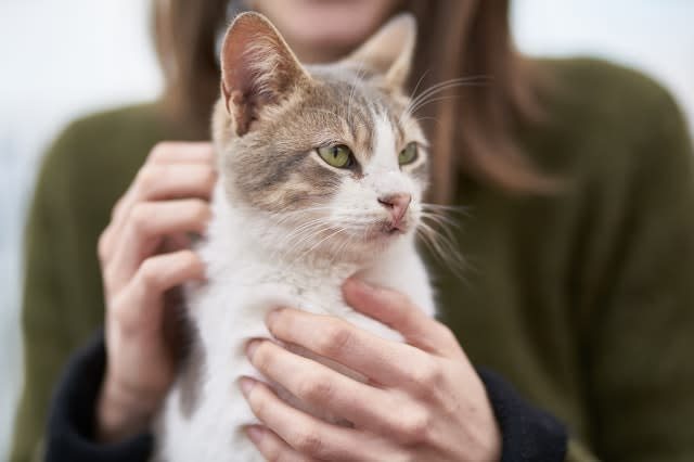 Cat held by owner