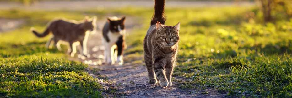 Cats walking in a park
