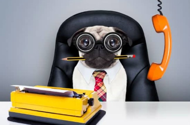 Photo of pug on sitting at a work desk.
