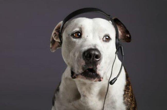 pit bull customer service representative