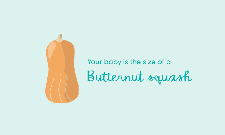 baby size of butternut squash week 29