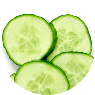 Cucumber extract ingredient