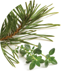 Patented Pine and Thyme Inspired Complex Ingredient
