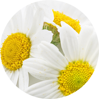 Chamomile and arnica