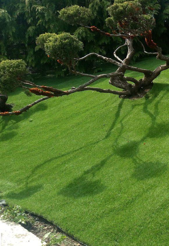Image_text_2_un-gazon-synthetique-bluffant-pour-un-jardin-en-relief