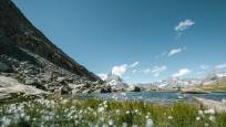 Riffelsee Lake Woolgrass Summer Gornergrat