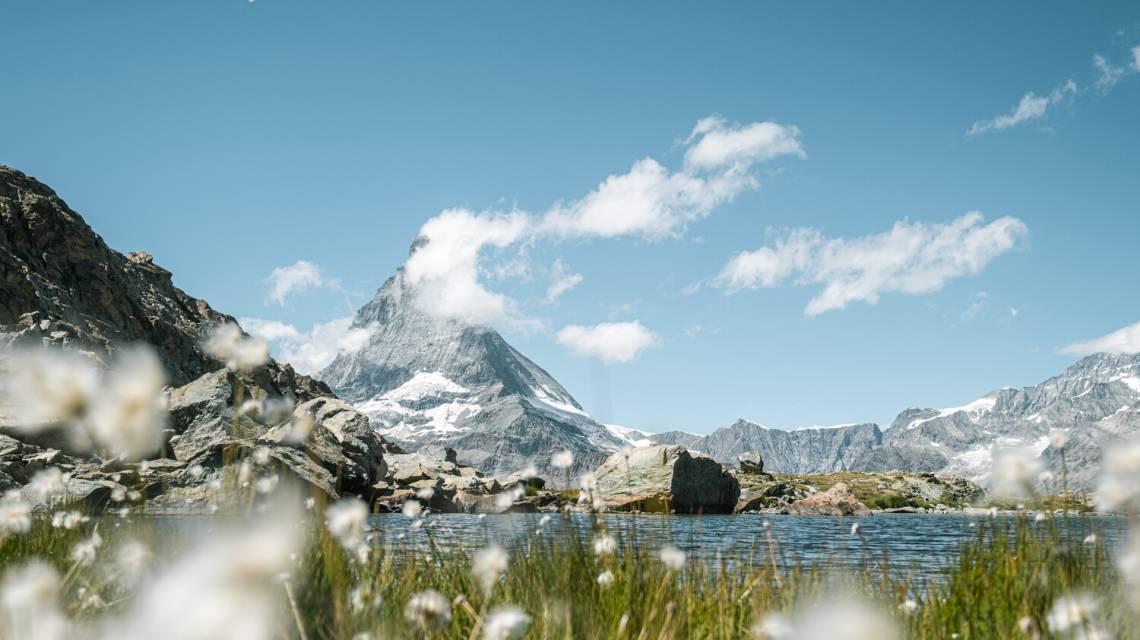 Wollgras am Riffelsee mit Matterhorn im Hintergrund