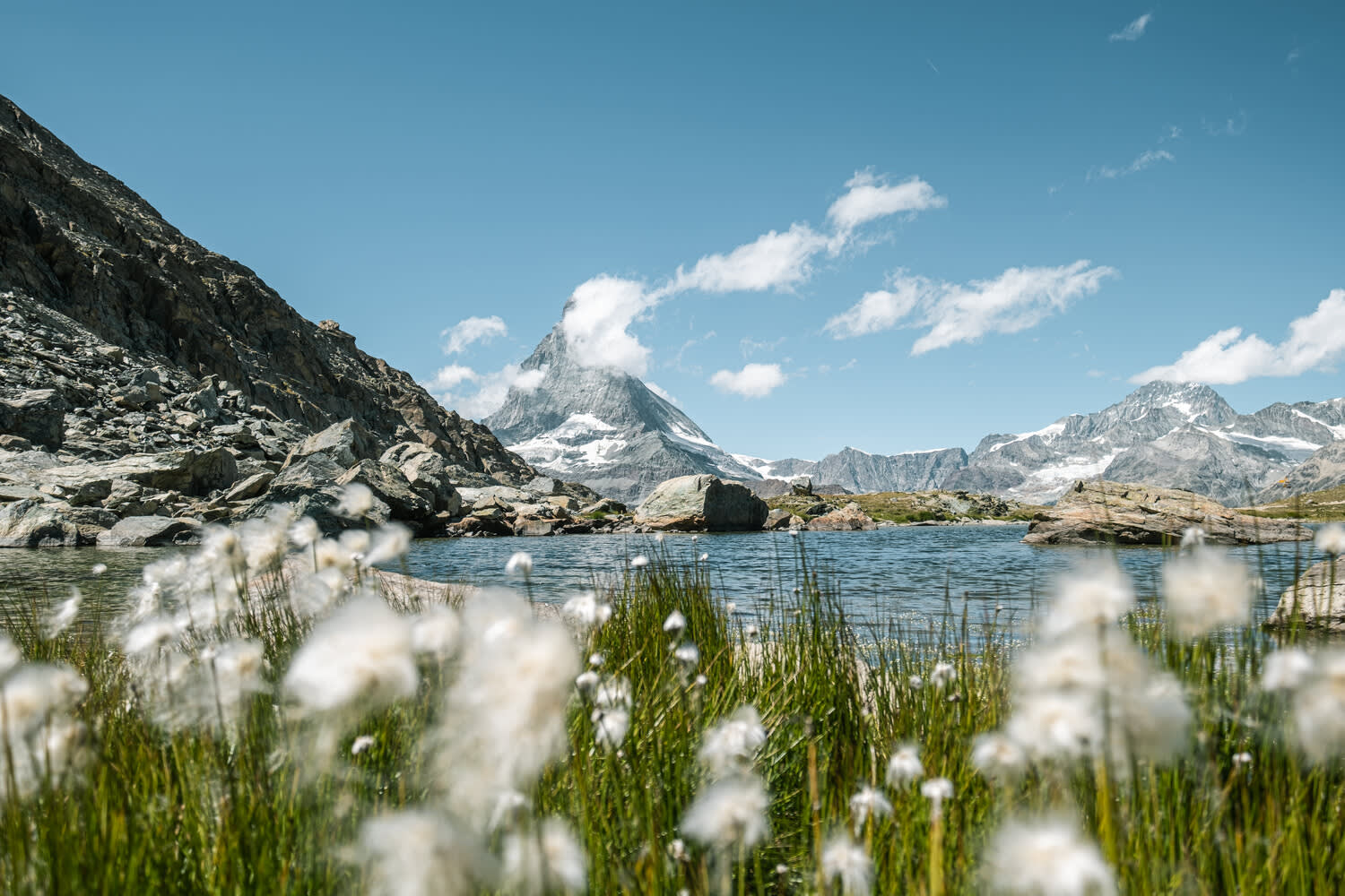 Cotton grass at Riffelsee Lake with Matterhorn in the background