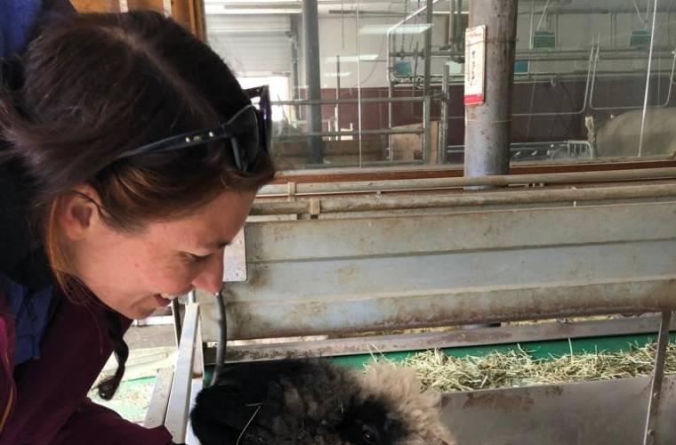 Deborah, shepherdess on the Gornergrat, Meet the Sheep