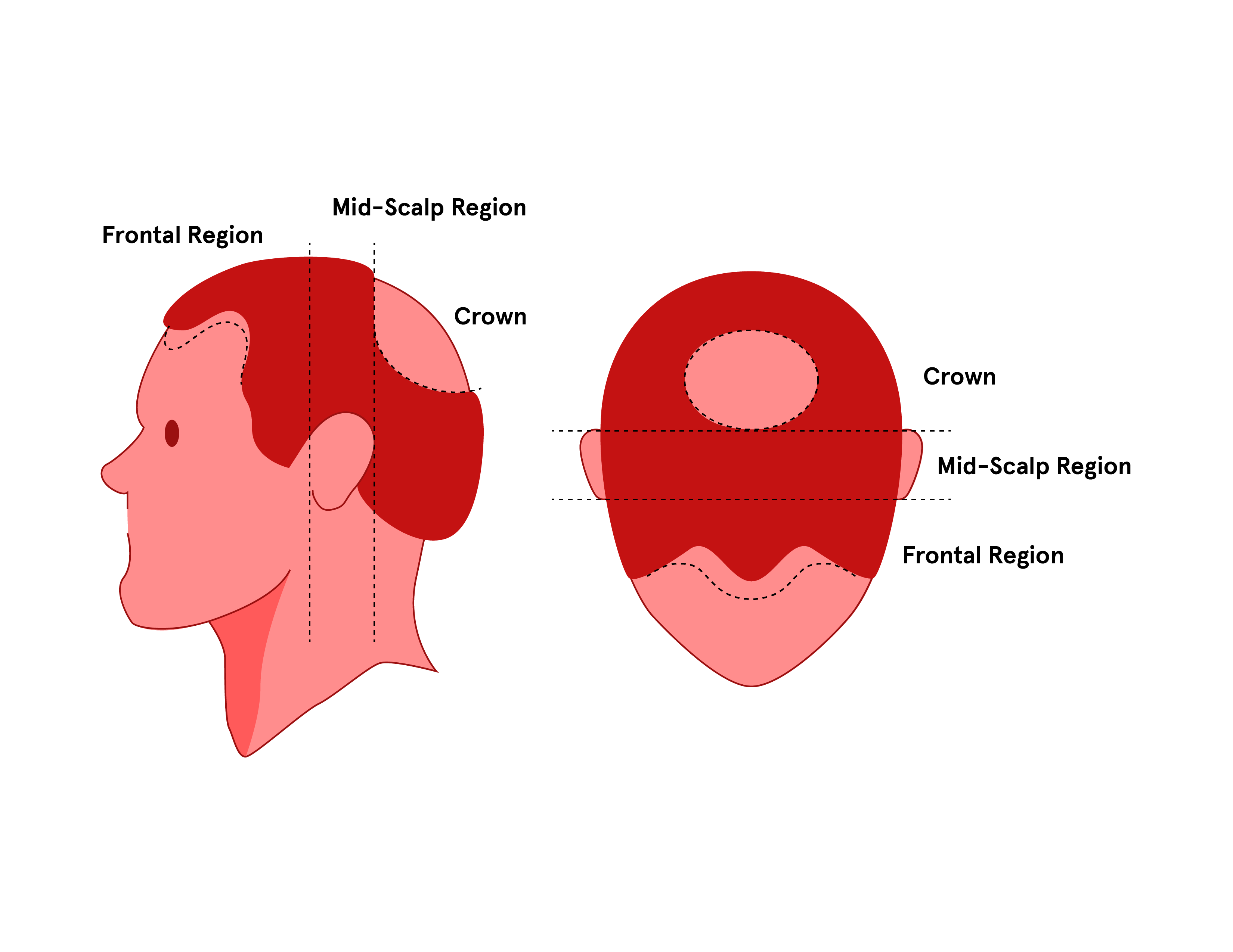 parts of the head illustration