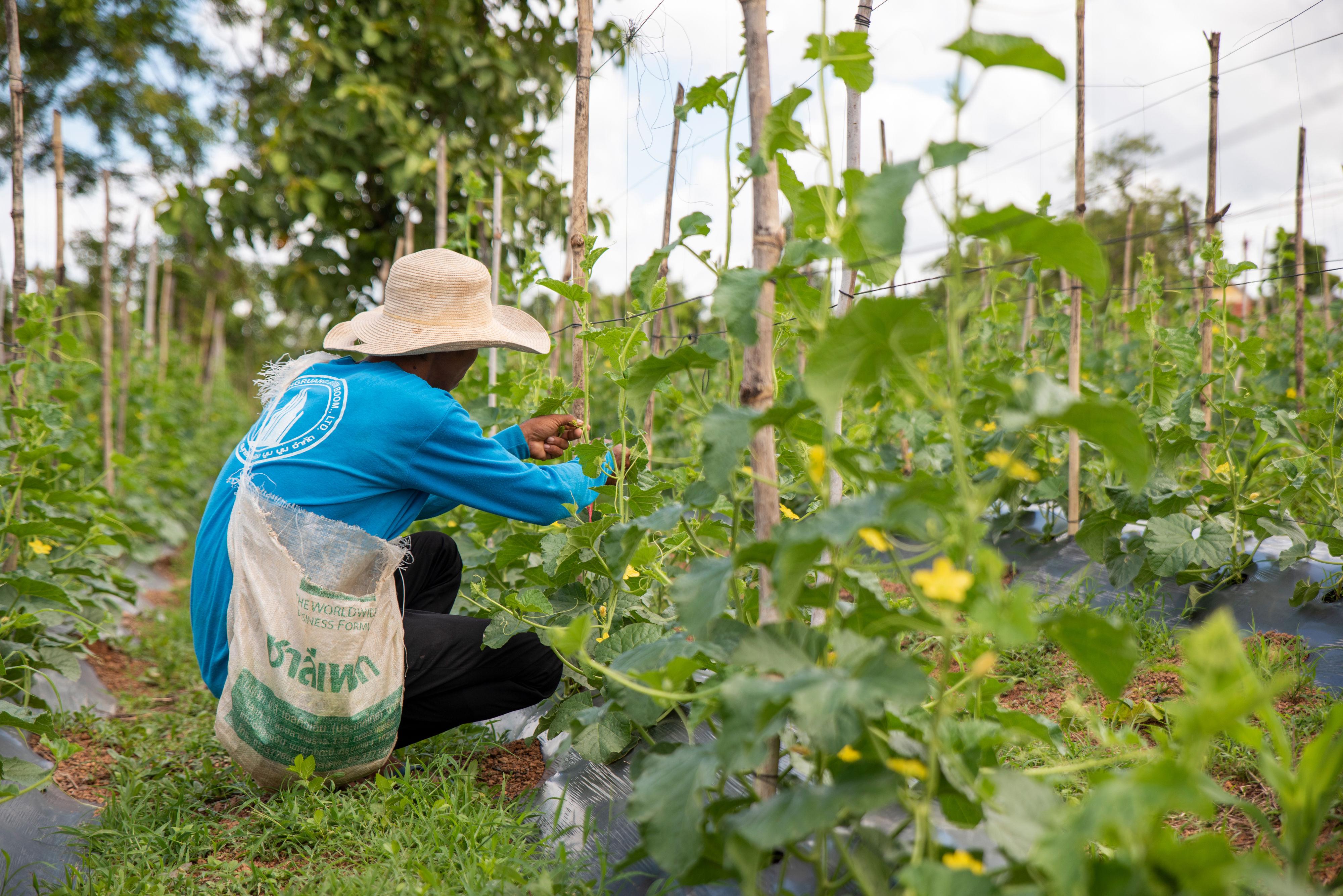 Working together international development hero image