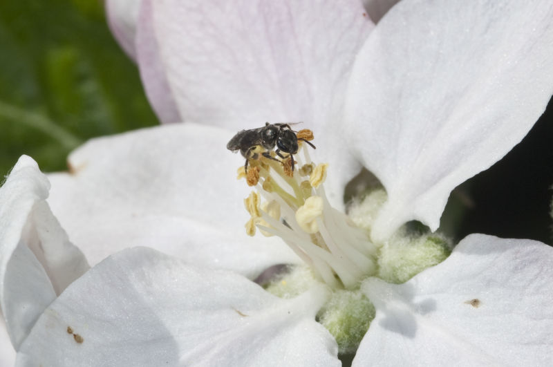 Global experts rank the causes and impact of pollinator decline