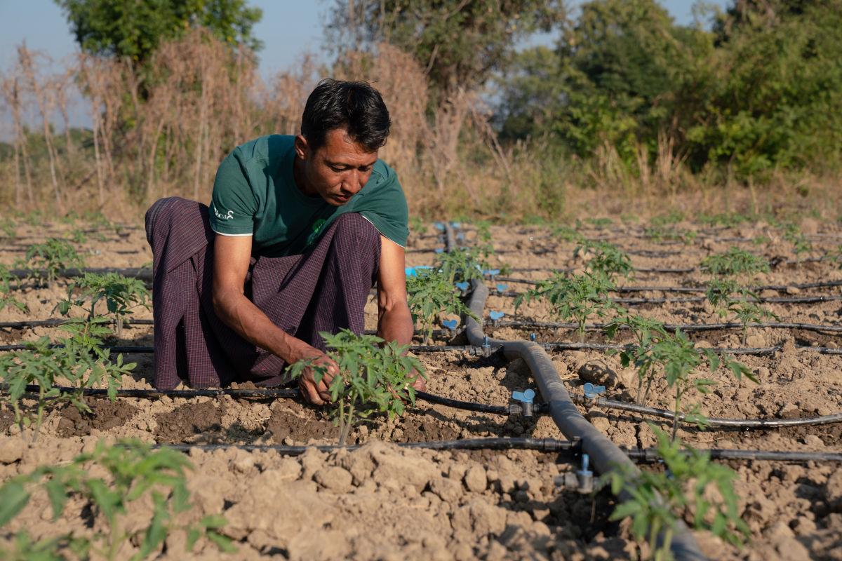 Vegetables in Myanmar