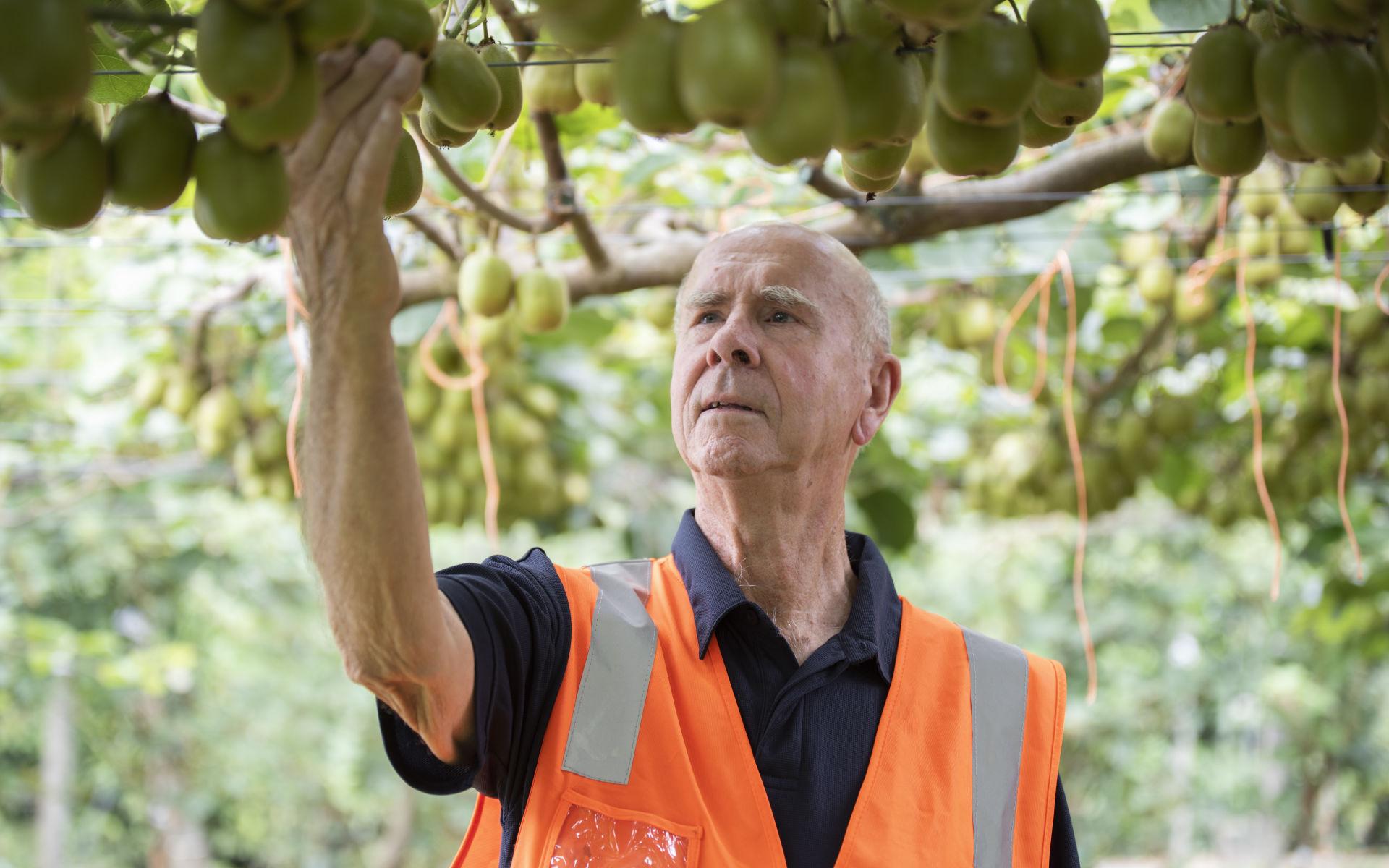 Scientist Russell Lowe wins Plant Raiser's Award for kiwifruit cultivar