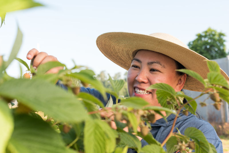 Bringing better raspberries to the world