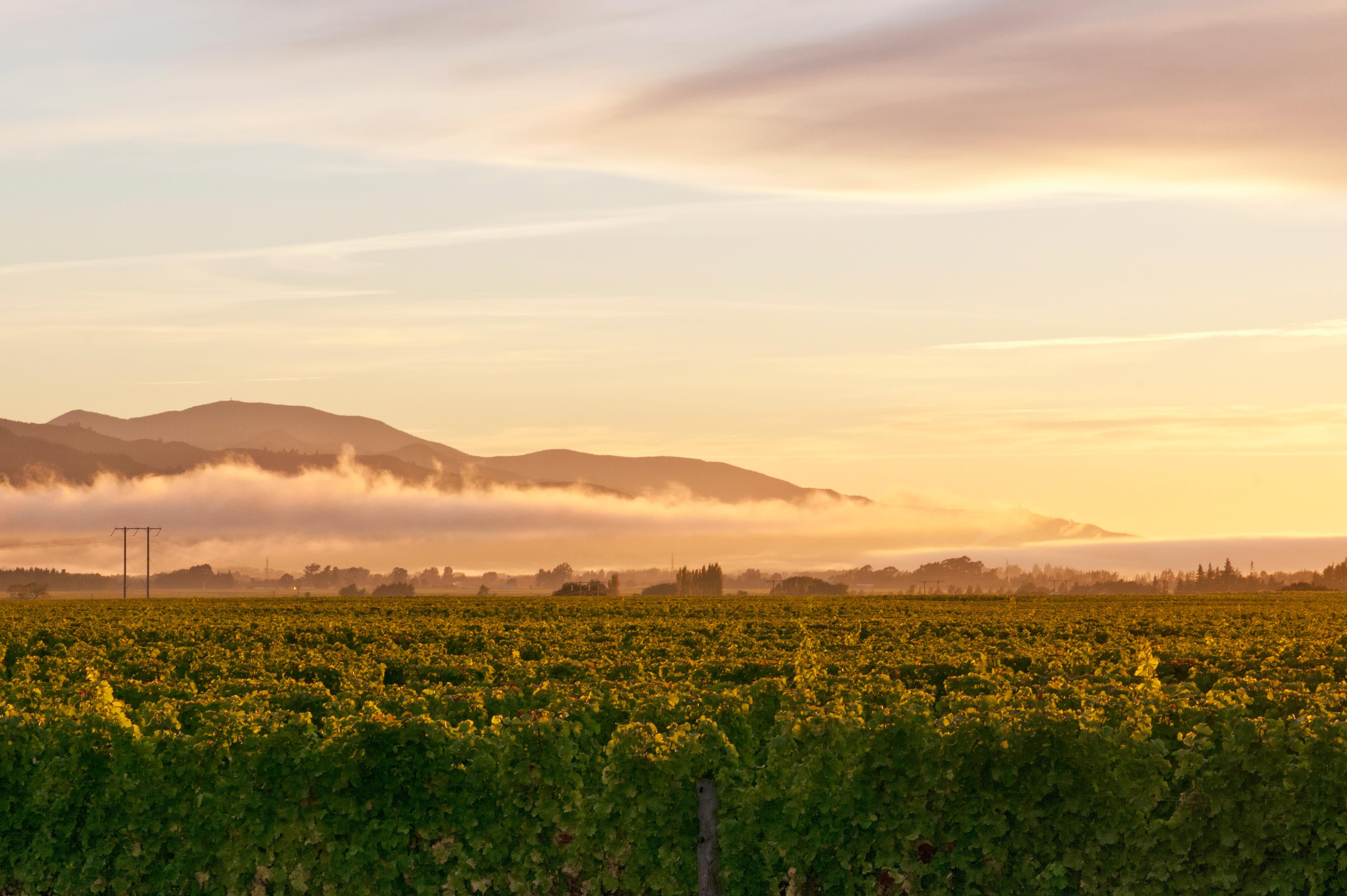 Sector vine crops hero image