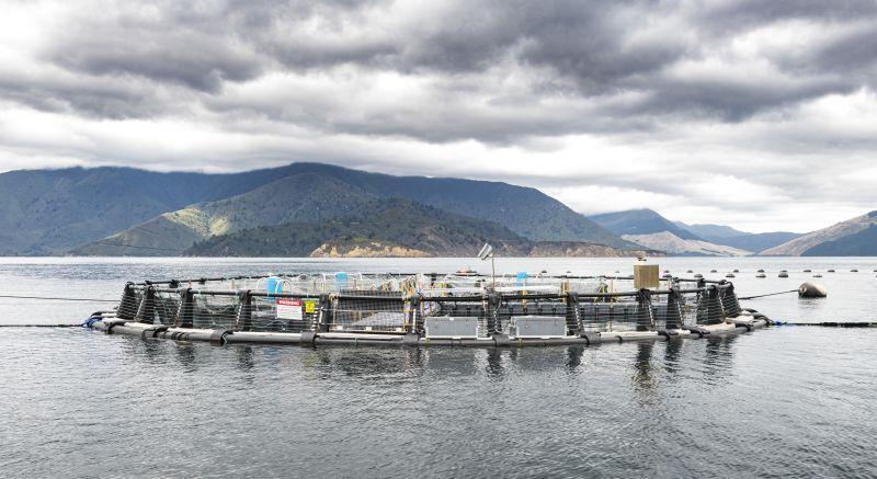 Ngāi Tahu Seafood (NTS) sea pen supports open ocean aquaculture research