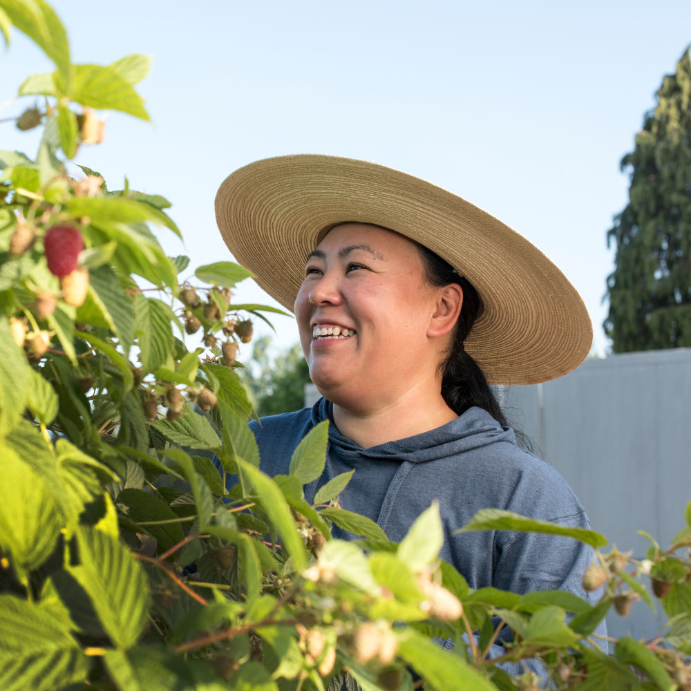 Examining berry crops and fruit