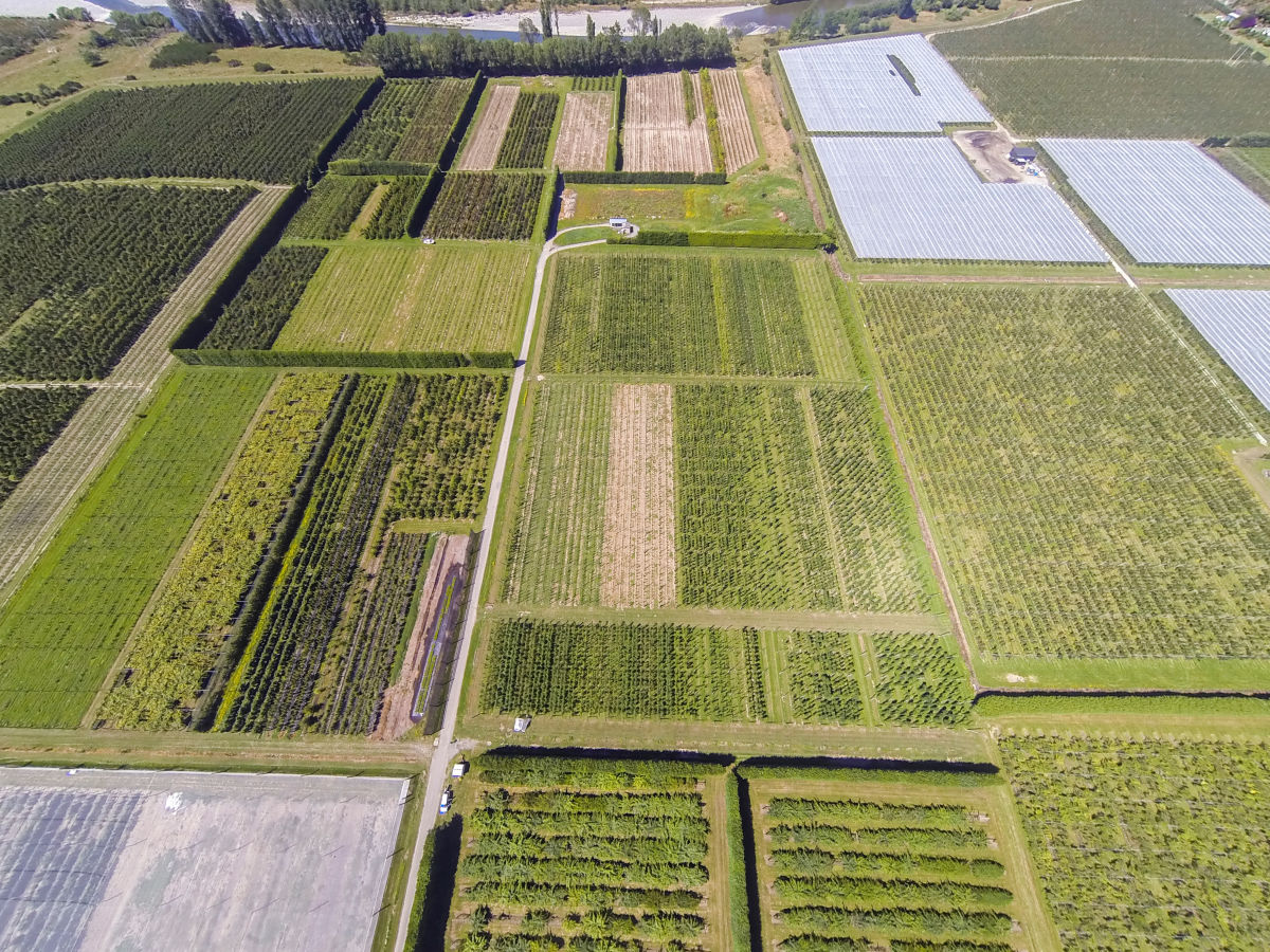 Working together plant varieties invest breeding programme hero image