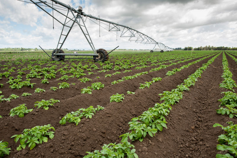 Making decisions to water the crop